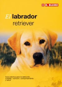 El labrador retriever
